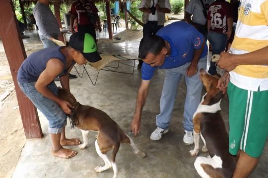 Dueños de perros y gatos se abocaron a la inmunización de sus mascotas
